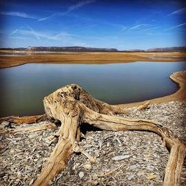 Tree stump and lake