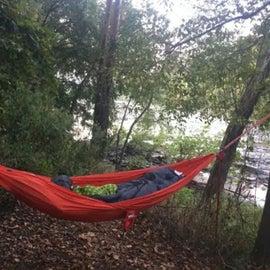 Plenty of hammock trees