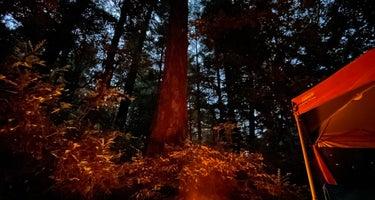 Humboldt Redwoods/Hidden Springs