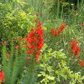 love the wildflowers