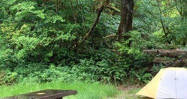 Hoh Campground - Olympic National Park