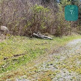 Grindstone Site 7