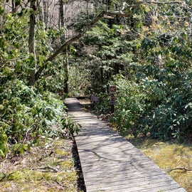 Trail to Mt Rogers