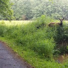 Elk on the bike path