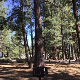 Small campground with tall pines