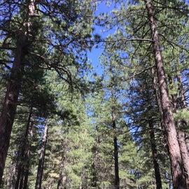 Trees, quiet amazing bird life too