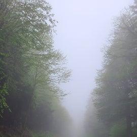 expect fog and rain