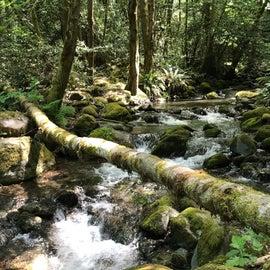 creek nearby campsites
