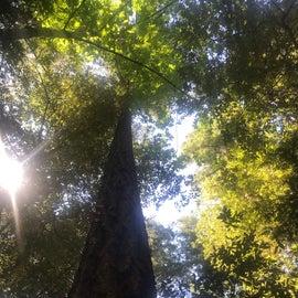 great trees provide shade