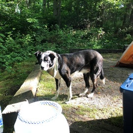 """The tent pad was small gravel/sand and framed by wood planks. It was a little bit higher than the """"living area"""" picnic table and fire ring. Our dog really enjoyed being on raised ground."""