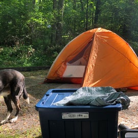 A photo of spacious tent pad (we have a two person tent)
