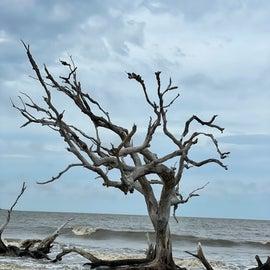 Driftwood Beach - Jekyll Island