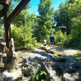 along bald rock trail