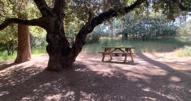 Cuyamaca Rancho/Paso Picacho Campground