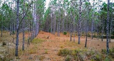 Starkey Wilderness Preserve — Serenova Tract