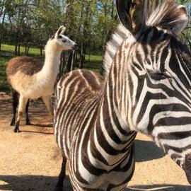 Safari Park fun