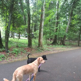 Paved trail that leads to nature trail