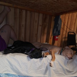 Dogs flopped after a hike, on the pet-friendly cabin bunk