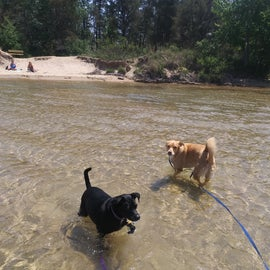 Our dogs don't even normally like to swim, but loved the dog beach, with it's warm shallow calm waters.