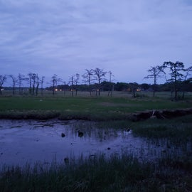 Night View of the Marsh