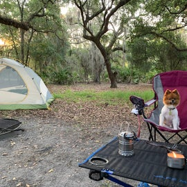 Rocco is the camping all star