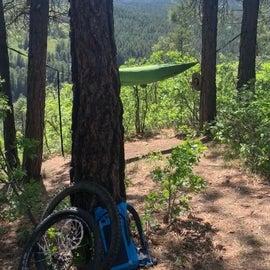 perfect hammock trees