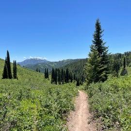 Trail nearby