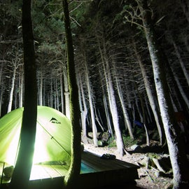 Mt Washington forest nights