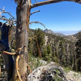 bristlecone trail to bonanza trail