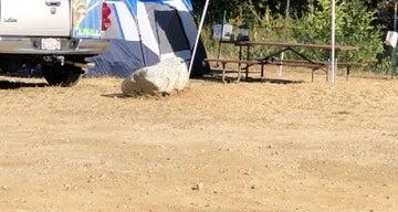 Camp Williams Resort
