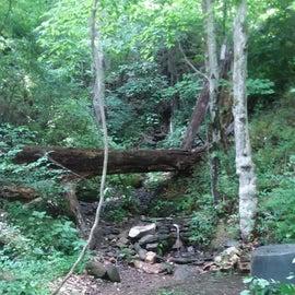 creek area