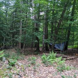 dense woods good for hammocks