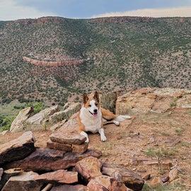 doggo posing for the pic.