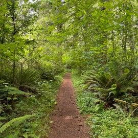 Hike to Alsea falls