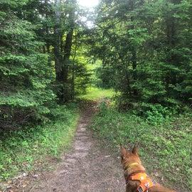 Short hiking trail