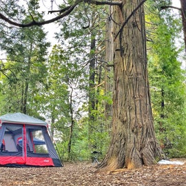 large sites for tents