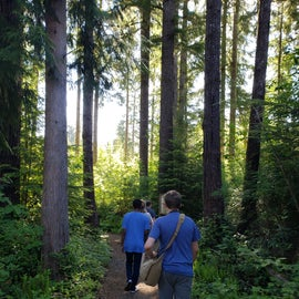 Walking the trail to the big spruce