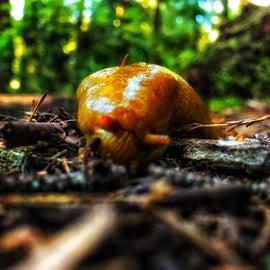 Naner slugs!