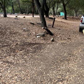 Toilet paper and other trash strewn around the campground/site