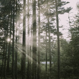 Tree cover between sites