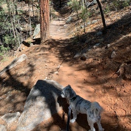 hike to McCauley Springs