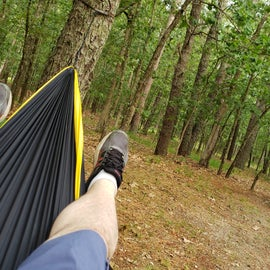 eno hammock set up viewing tent and woods