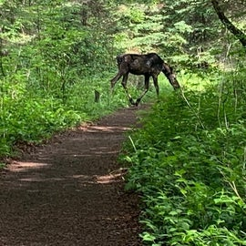 You have a real good chance of seeing a moose.