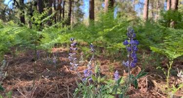Lockett Meadow Dispersed Camping