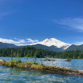 """""""Pink Flower Boat"""" one of many logs floating or lodged in the lake. Oh yeah and mount Baker!"""