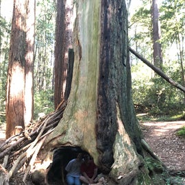 big trees with hidey holes