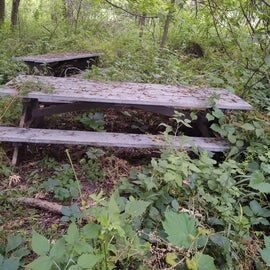 Haunted Picnic Tables 🦇