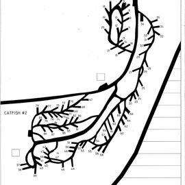 Whites Catfish Cove Map