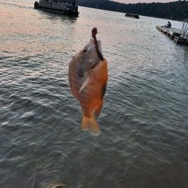 Fishing at Nolin Lake