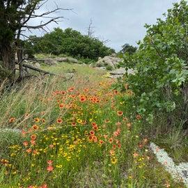 beautiful flowers along the hiking trail